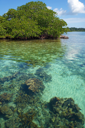 waters: Transparent waters of the Caribbean sea with corals under water surface and an islet of mangrove tree in background, Bocas del Toro, Panama, Central America Stock Photo