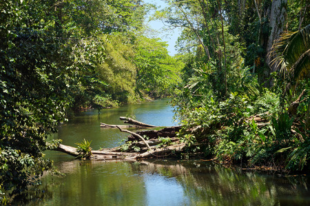 Small tropical river with fallen tree in the jungle of Costa Rica, Caribbean, Puerto Viejo de Talamanca photo