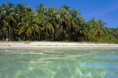 unspoiled: Virgen playa tropical con palmeras de coco se ve desde la superficie del mar, el Caribe, Panam�