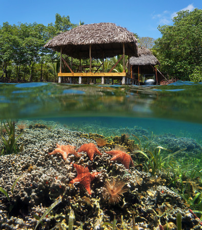 Tropical scene in the Caribbean sea with a thatched hut over water and underwater a coral reef with starfish photo