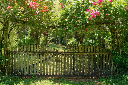 Old gate entrance of tropical garden with a bougainvillea, Costa Rica