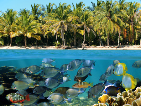 Underwater and surface view of an tropical beach with coral reef fish photo