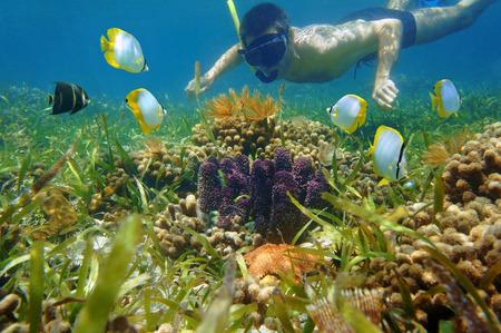 水中サンゴ礁のカラフルな海の生活と熱帯の魚を探してシュノーケルの男 写真素材