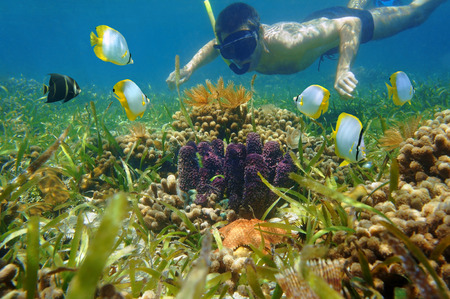 Man in snorkel underwater looking colorful sea life and tropical fish in a coral reef