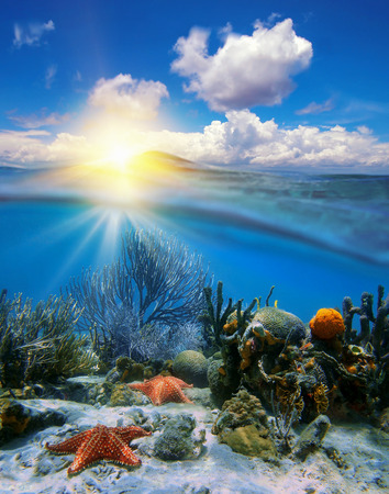 Cloudy blue sky with sunset at horizon and split by waterline, underwater corals with sea stars