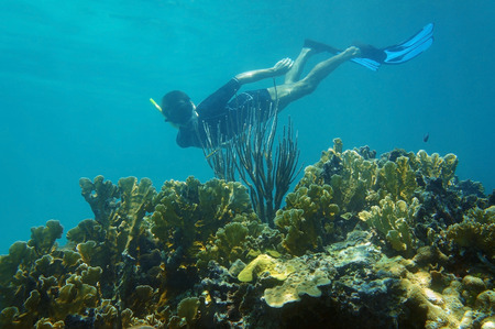 Man underwater snorkeling in an healthy coral reef photo