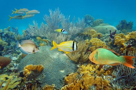 Onderwater landschap in een gezond koraalrif met kleurrijke tropische vissen