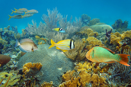 Underwater landscape in an healthy coral reef with colorful tropical fish