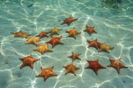 oreaster reticulatus: many cushion sea star on sand underwater in the Caribbean sea, Bocas del Toro, Panama, Central America