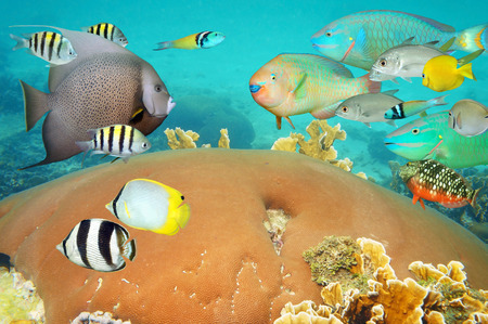 tropical underwater life with colorful school of reef fish and coral photo