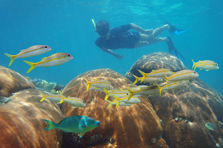underwater scene with man snorkeling in a coral reef and looking school of fish in the Caribbean sea photo