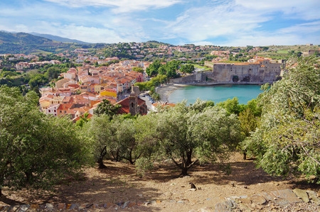 vermilion coast: old Mediterranean village of Collioure with olive trees in foreground, Vermilion coast, Roussillon, Pyrenees-Orientales, France Stock Photo
