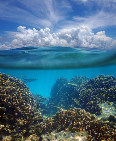 Above and below surface of the Caribbean sea with coral reef underwater and a cloudy blue sky photo