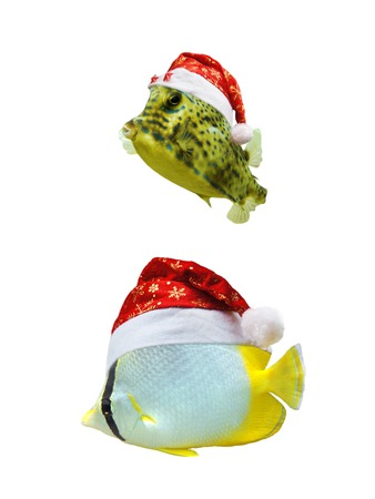 Christmas tropical fish wearing a santa hat and isolated on white background photo