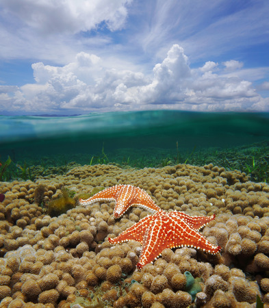 Over and under water surface of the Caribbean sea with starfish on coral reef and split by waterline a cloudy blue sky photo