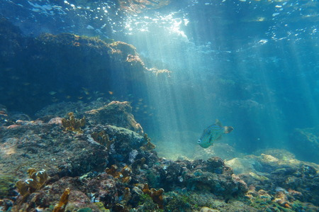 Rays of light underwater through the water surface viewed from the seabed on a reef with fish, Caribbean sea, natural scene 免版税图像