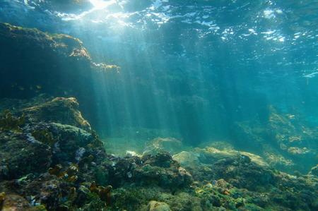 mar: Los rayos de sol bajo el agua a través de la superficie del agua se ve desde el fondo del mar en un arrecife del mar Caribe, Lugar natural