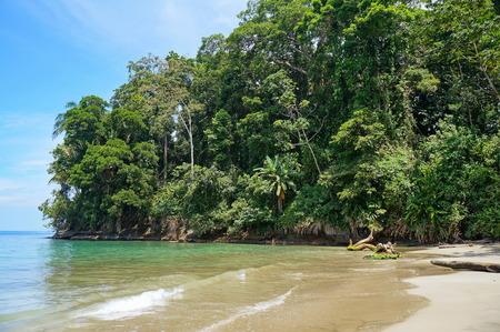 limon: Tropical shore with lush vegetation on Punta Uva beach, Caribbean, Puerto Viejo, Costa Rica