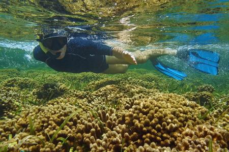 branched: Man snorkeler over coral reef, Bocas del Toro, Panama, Caribbean sea Stock Photo