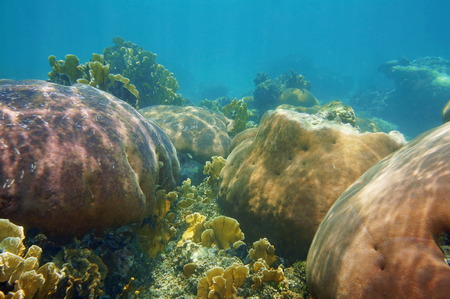 Underwater landscape in a stony coral reef of the Caribbean sea photo