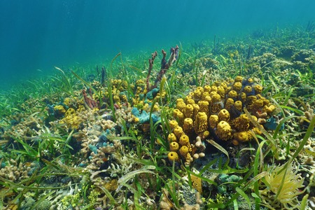 ocean floor: Colorful ocean floor with sea sponges on a coral reef Stock Photo
