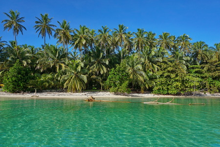 Sandy Caribbean shore with lush tropical vegetation, viewed from the sea