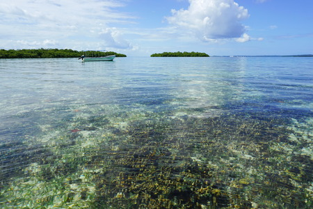 clear water: Calm and clear water with coral reef below sea surface and a boat with mangrove islands in background, Caribbean, Panama, Central America