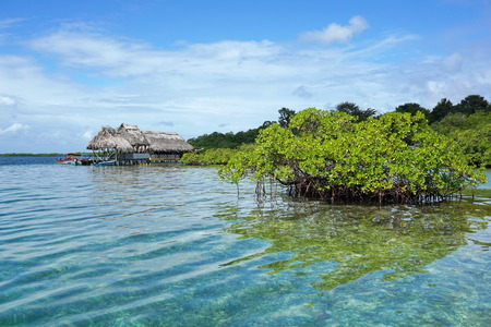 bocas del toro: Islet of mangrove tree in the water with a tropical restaurant over the sea in background, Caribbean sea, Panama, Bocas del Toro