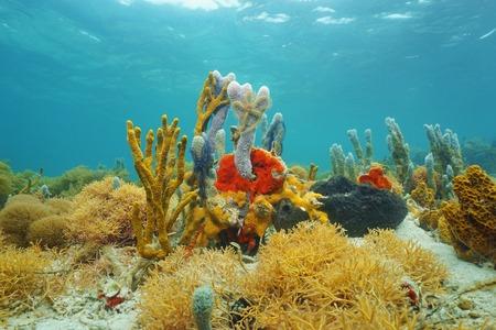 fond marin: Mer Colorful éponges sous-marine sur fond de la mer des Caraïbes Banque d'images