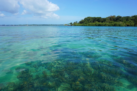 bocas del toro: Clear water with corals below sea surface and the island of Solarte in background, Caribbean, Bocas del Toro, Panama