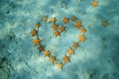 Group of starfish arranged in heart shape underwater on sandy seabed of the Caribbean sea