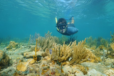 snorkeling: Man snorkeling underwater looks at the camera on a shallow reef with soft corals, Caribbean sea, Panama