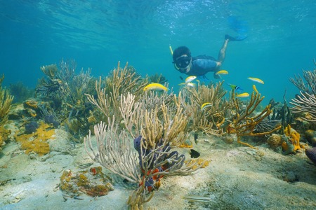 soft coral: Man snorkeling underwater on a reef with soft coral and tropical fish, Caribbean sea, Panama