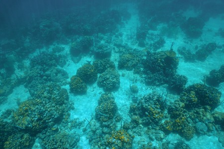 Underwater landscape over a coral reef viewed from above in the Caribbean sea Фото со стока