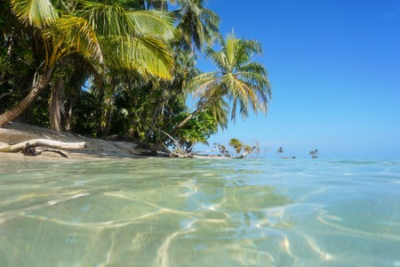 unspoilt: Lush tropical shore with coconut tree leaning over the sea, viewed from water surface, Zapatilla islands, Caribbean, Panama Stock Photo