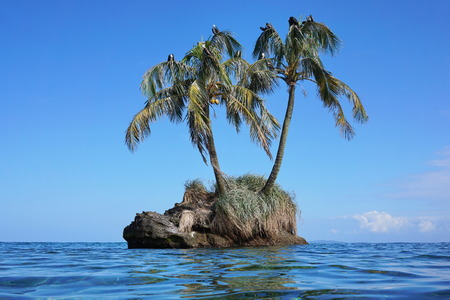 islet: Small islet with two coconut palm trees and sea birds on leaves, Zapatillas island, Caribbean, Panama