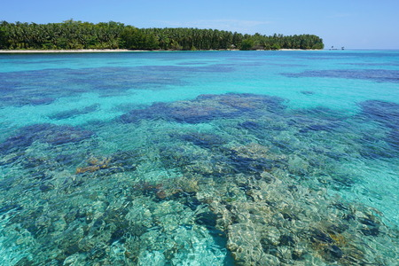pristine corals: Turquoise water with coral reef below sea surface and a pristine tropical island in background, Caribbean, Cayos Zapatilla, Bocas del Toro, Panama