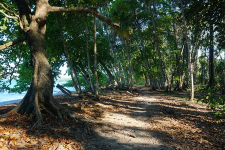 viejo: Coastal footpath under tropical trees on the Caribbean shore of Costa Rica Puerto Viejo Central America
