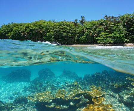 underwater: Split image half above and underwater of a tropical shore with lush vegetation and corals below the surface Caribbean sea Costa Rica Stock Photo