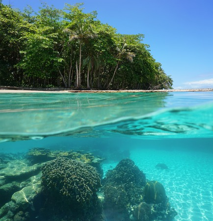 Split image of tropical shore above and below sea surface with lush vegetation and a coral reef underwater Caribbean sea Costa Rica
