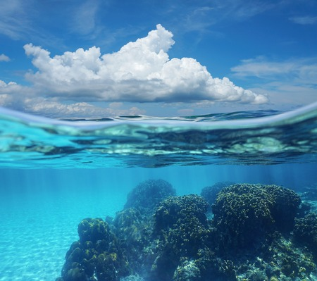 coral ocean: Top half with blue sky and cloud, and underwater split by waterline, a coral reef with sandy seabed, Caribbean sea, Costa Rica Stock Photo