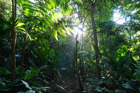 Jungle path through lush vegetation, natural scene, Caribbean side of Costa Rica, Central America