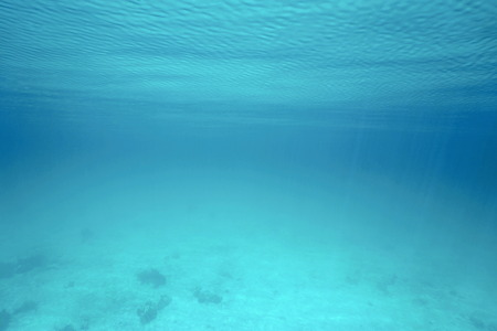 underwater scene: Underwater in the sea with calm water surface and ripples, natural scene