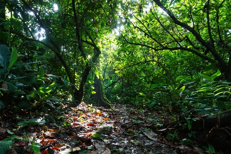 surrounded: Footpath surrounded by lush tropical vegetation in the jungle of Costa Rica, natural scene, Central America