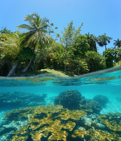 Split image above and below water surface with a lush tropical island shore and a coral reef underwater, Caribbean sea