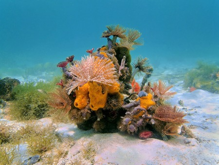 Colorful underwater marine life composed by tube worms and sea sponges on the seabed, Caribbean sea
