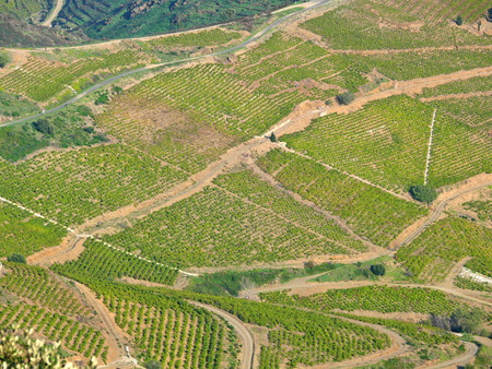 roussillon: Aerial landscape of vineyards fields in the south of France, Banyuls sur Mer, Pyrenees Orientales, Languedoc Roussillon
