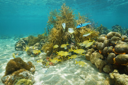 fish water: Underwater scenery, tropical reef fish swimming near corals, Caribbean sea, Mexico, America Stock Photo
