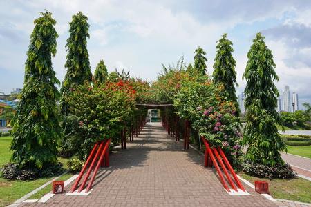 entrance arbor: Walkway under a tunnel of bougainvillea, Plaza Quinto Centenario, Panama City, Panama, Central America
