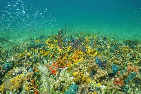 ocean floor: Colorful sea life underwater on the ocean floor, mostly sponges, Caribbean, Panama Stock Photo
